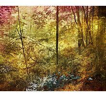 Forbidden Forest Photographic Print