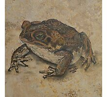 Toad on a Kitchen Tile. Photographic Print