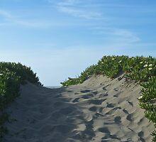 Sand Dune  by Cheyenne Hoffman