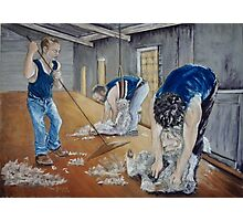 Shearing of the Lambs Photographic Print