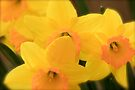 Softly Spring by NatureGreeting Cards ©ccwri