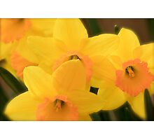 Softly Spring Photographic Print