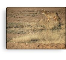 Coyote Watch Canvas Print
