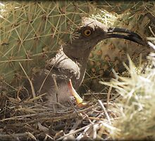 Curved-billed Thrasher with Gentle Babe by Kimberly Chadwick