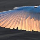 winging it at Malibu lagoon by Tim Horton