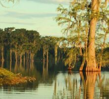 Cypress Trees on Lake Piney Z in Tallahassee Sticker
