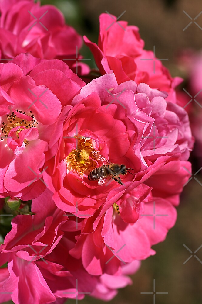 Natural Rose Bouquet  by Joy Watson