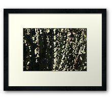 Sharp Shapes and Shadows - Cactus Garden Framed Print