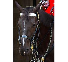 HORSE GUARD Photographic Print