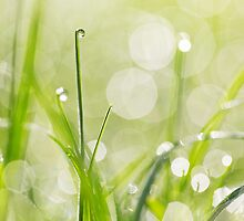 Dewdrops on the Sunlit Grass by Natalie Kinnear