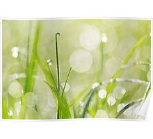 Dewdrops on the Sunlit Grass Poster