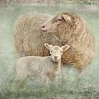 Mother with lamb by Amar-Images