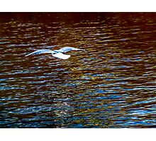 On a Wing & a Prayer Photographic Print