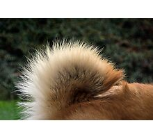 Chow Flag Photographic Print