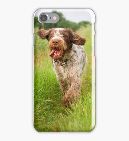 Brown Roan Italian Spinone Dog in Action iPhone Case/Skin