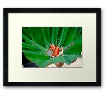 Red Frog Beach Framed Print