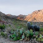 Tucson Mountains by Gordon  Beck