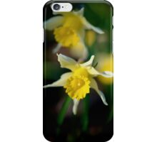 wild daffodils iPhone Case/Skin
