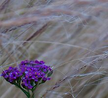 Purple wind by Rod Raglin