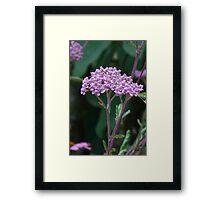 Pink flower cluster crown Framed Print