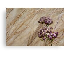 Wind Grass and Bloom Canvas Print