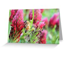 Texas Wildflowers and Bee Greeting Card