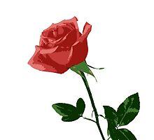 Beautiful Rose by cnstudio