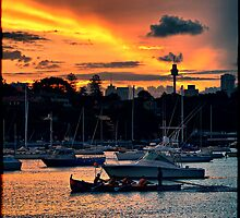 Rose Bay marina by andreisky