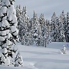 Serene Snow Scene by Jared Manninen