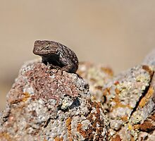 Western Fence Lizard by Jared Manninen