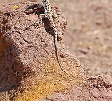Long-Nosed Leopard Lizard by Jared Manninen
