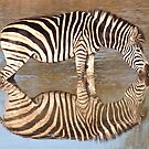 Zebra Reflected by George Cathcart