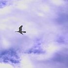 DART ACROSS THE STORMY SKIES by NICK COBURN PHILLIPS