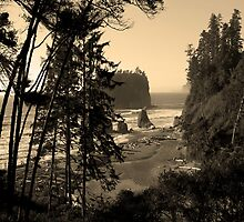 ruby beach, wa, usa old school (square) by dedmanshootn