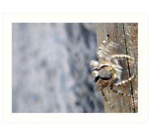 ©NS A Spider Life IIA Art Print