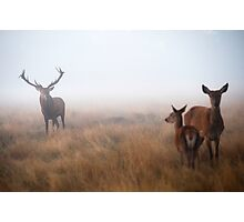 Misty Stag's Photographic Print