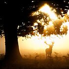 Morning Stag by LauriHPhoto