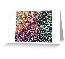 Living Reef Greeting Card