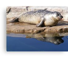 Silly Seal Canvas Print