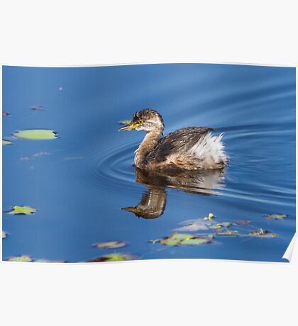 Grebe Double Poster