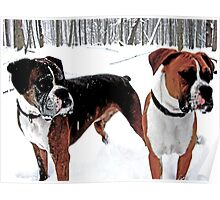 Boxers in the Snow Poster