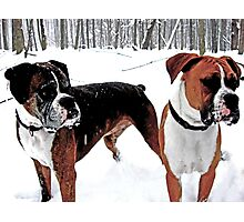 Boxers in the Snow Photographic Print