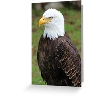 American Bald Eagle on a Roost Greeting Card