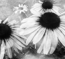 Infrared Coneflowers by MSRowe Art and Design