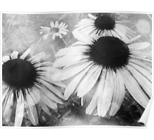 Infrared Coneflowers Poster