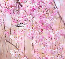 Black Cap Chickadee & Pink Weeping Willow by daphsam