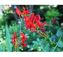Beautiful Red Flowers Photographic Print
