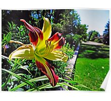Beautiful Garden Lily Poster