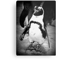 Happy Penguin Metal Print