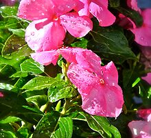 Dewdrops on the Vinca by Christine Chase Cooper